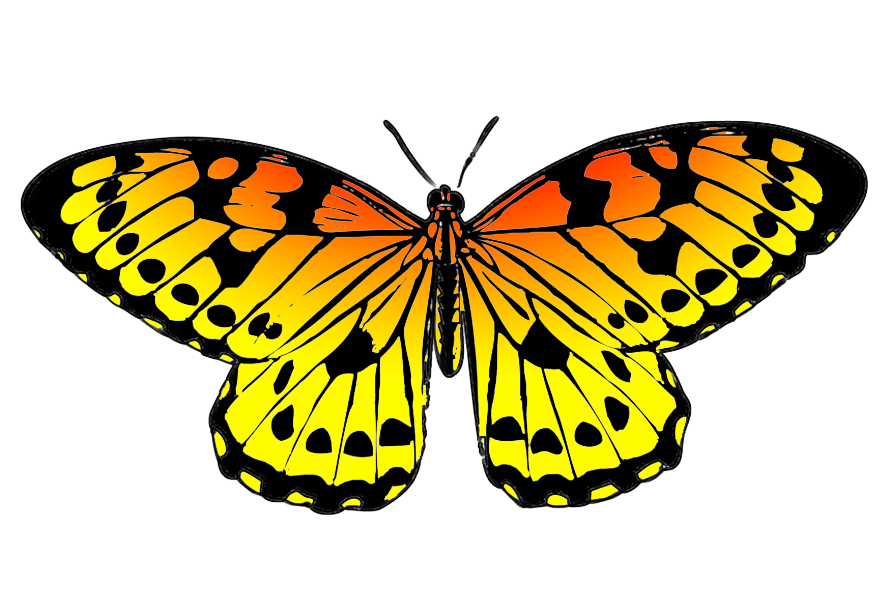 Black and orange drawing. Clipart butterfly couple