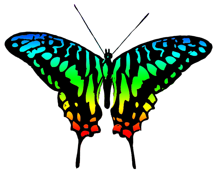 Multicolored image . Clipart butterfly couple