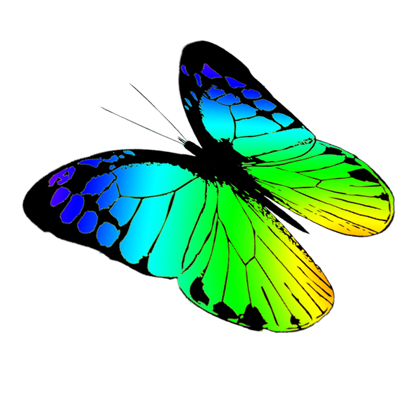 Clipart butterfly couple. Free butterflies drawing