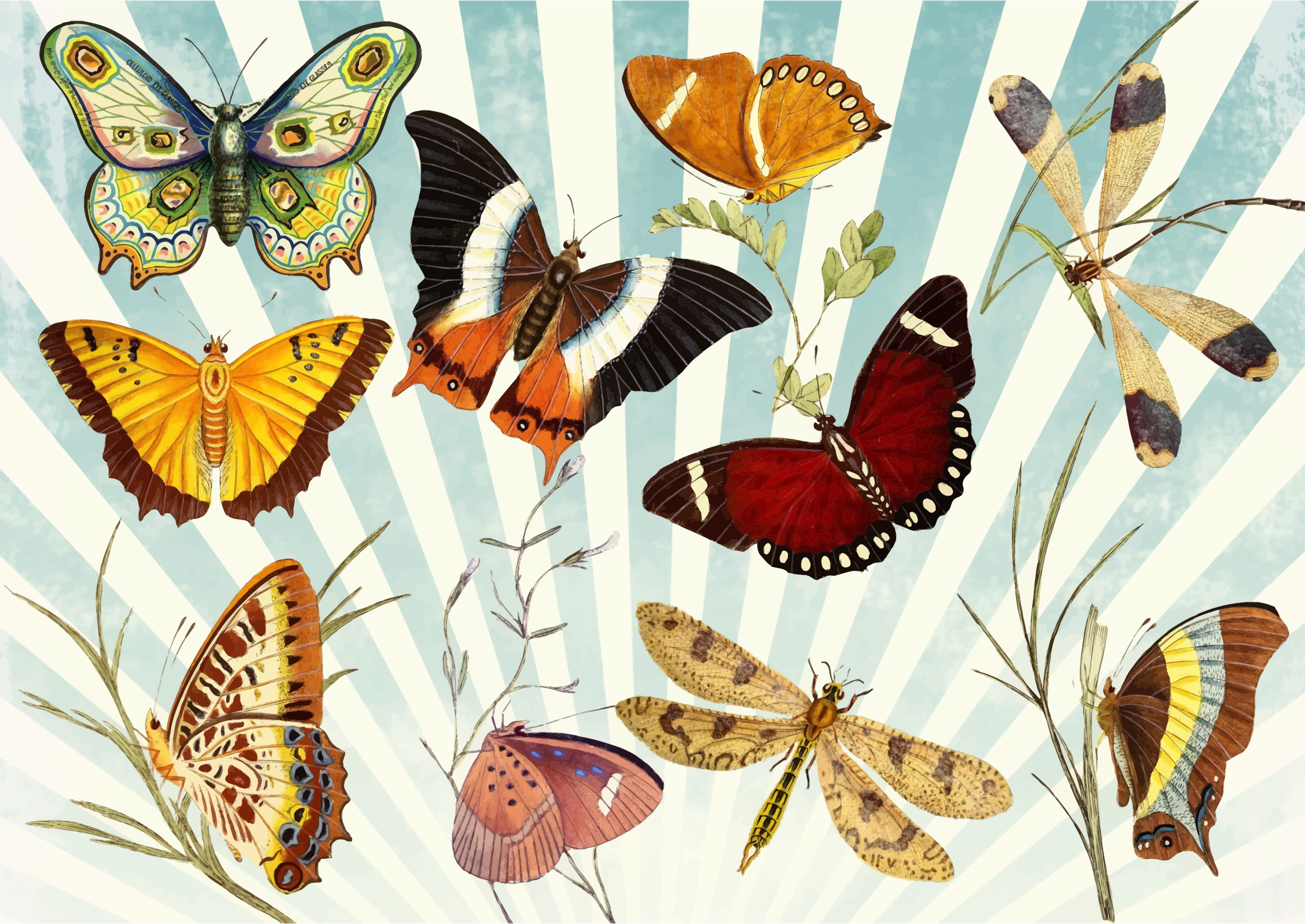 clipart butterfly dragonfly