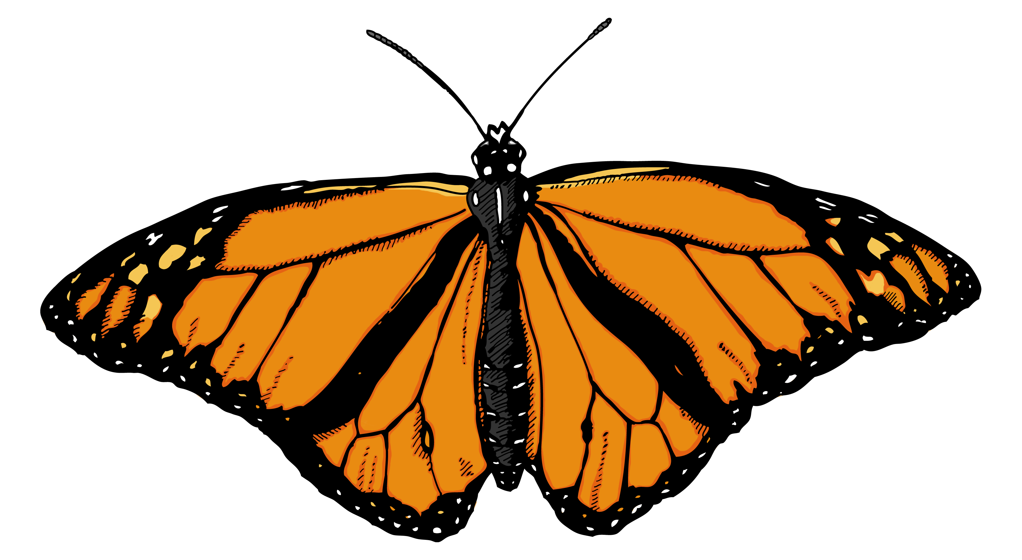 Preschool clipart butterfly. Png image free picture