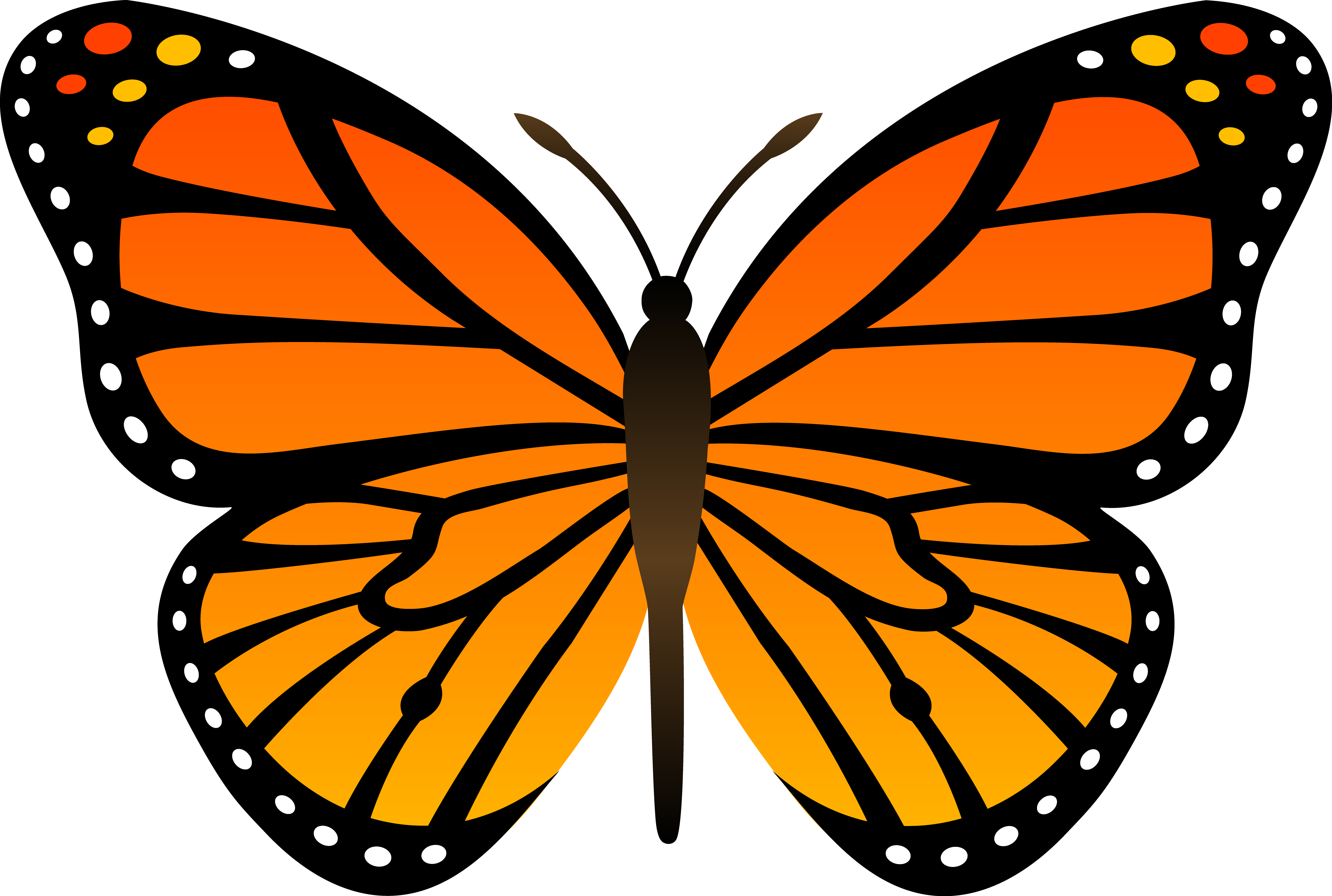 Monarch butterfly free . Frog clipart symmetrical