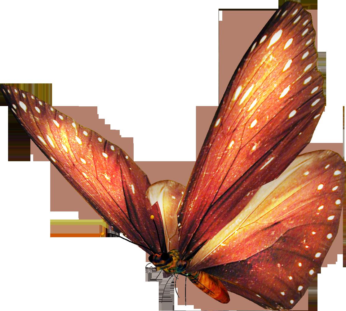 Mariposas animadas imagenes de. Clipart butterfly exercise
