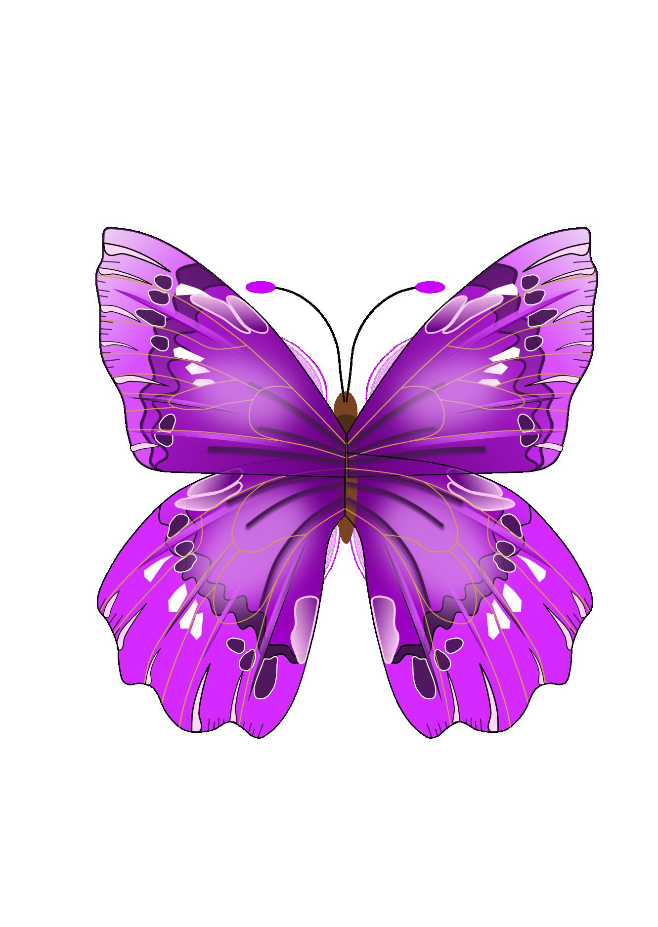 Clipart butterfly exercise. Szukaj w google motyle