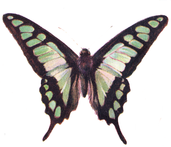 Free clip art beautiful. Moth clipart vintage butterfly