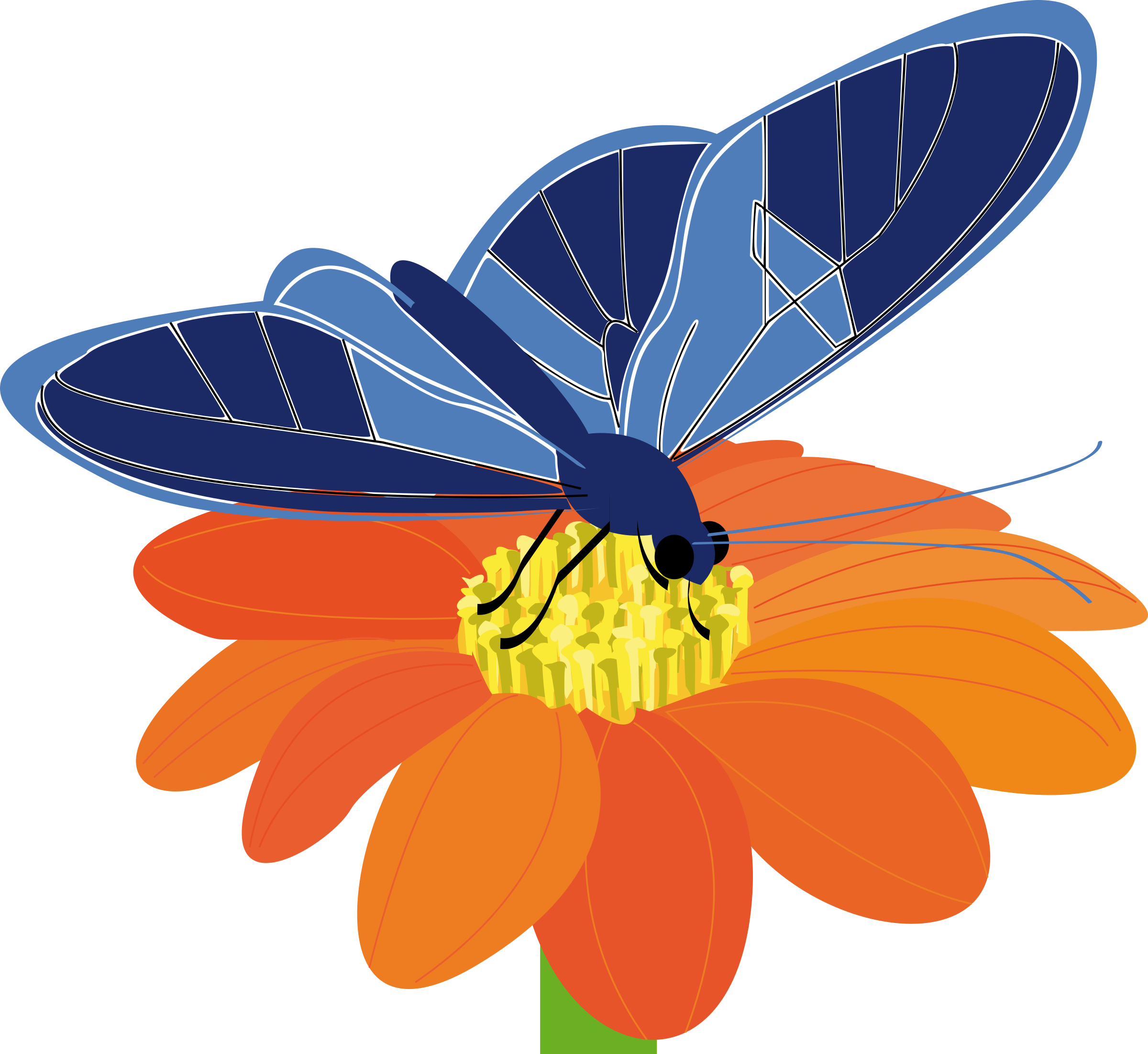 Clipart butterfly flower. On a big image