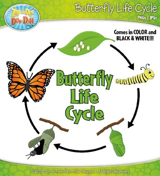 Butterfly clip art worksheets. Cycle clipart life cycle