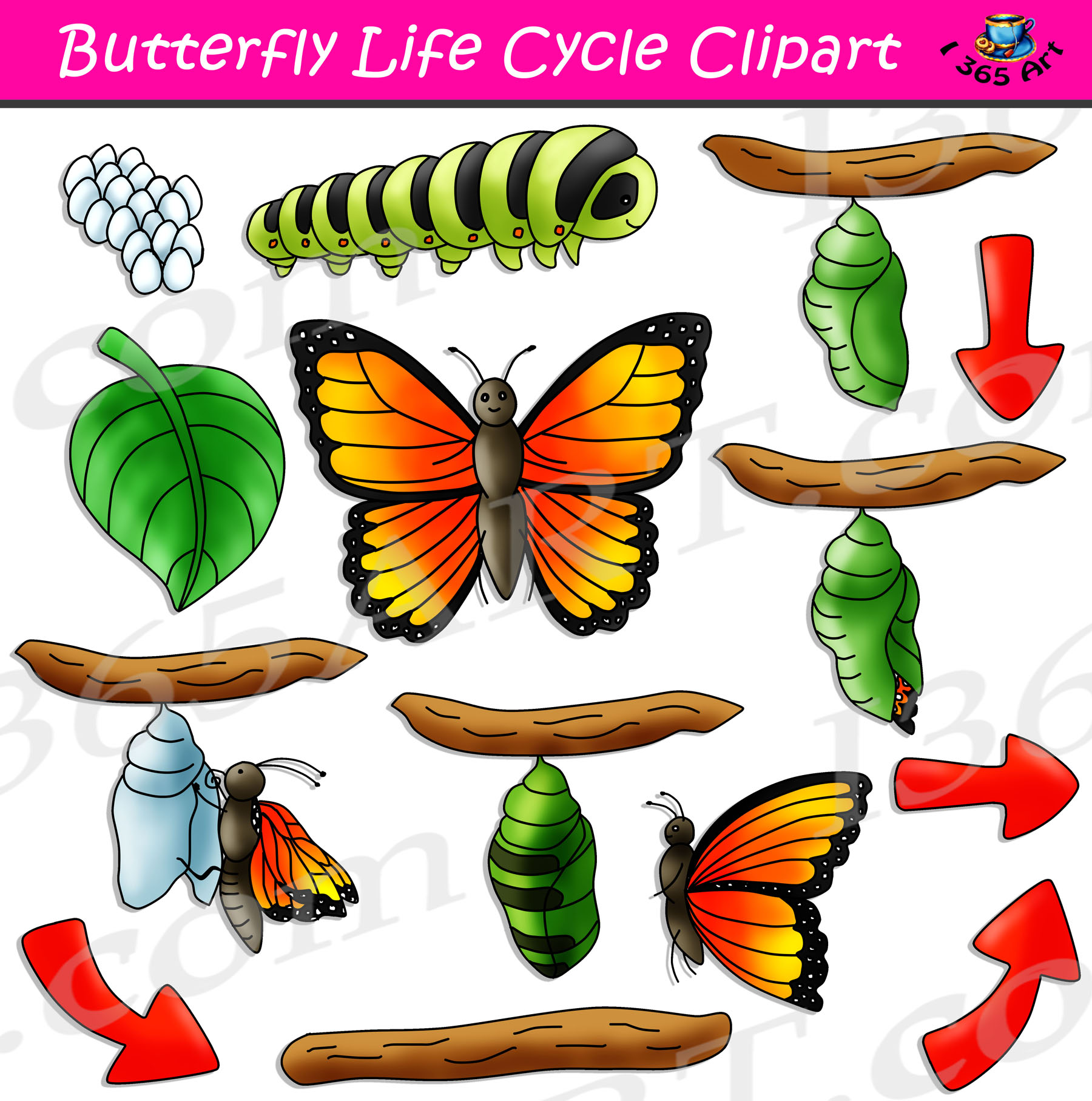 Cycle clipart life cycle. Butterfly bundle