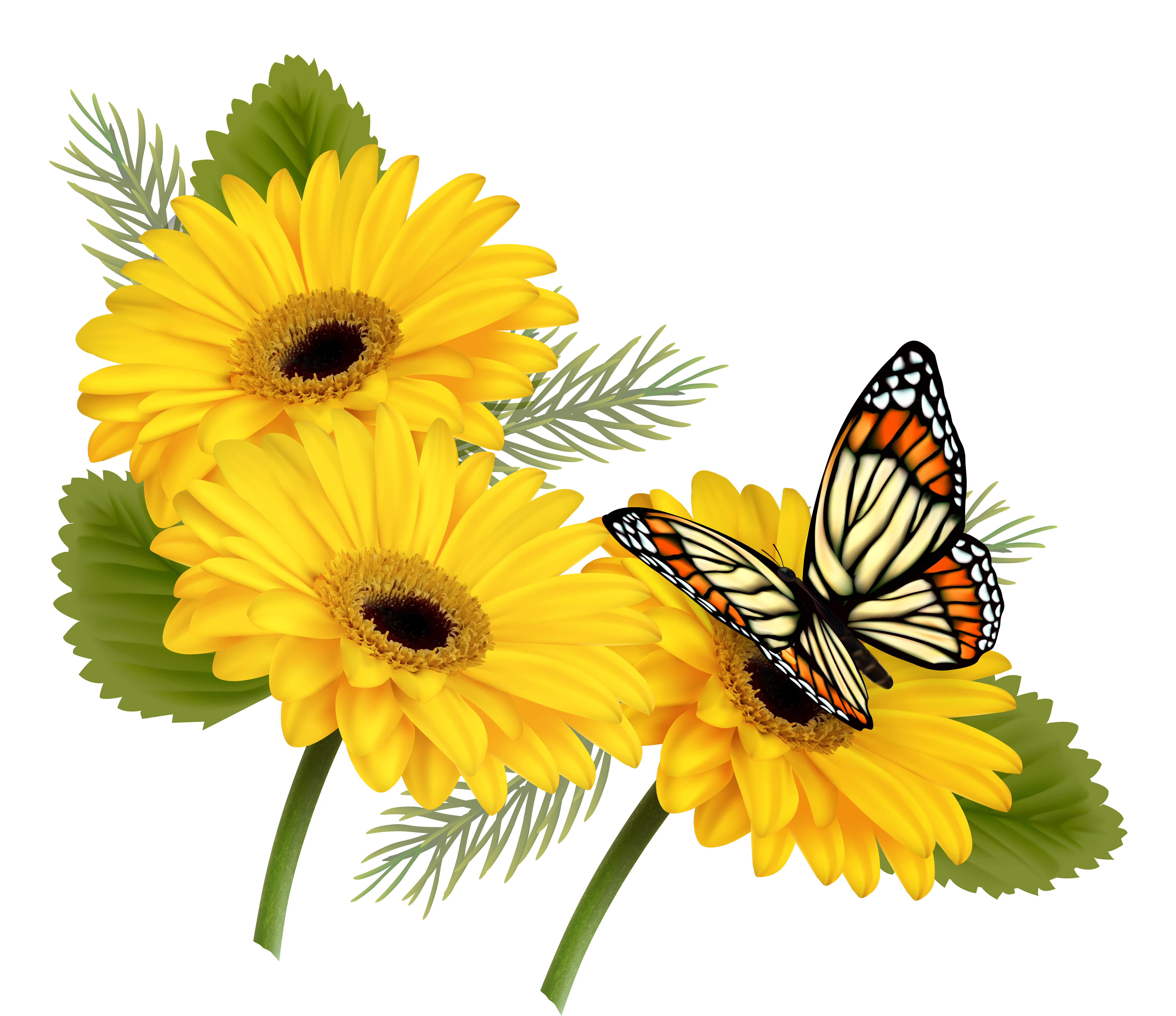 Yellow gerberas with png. Clipart butterfly happy birthday