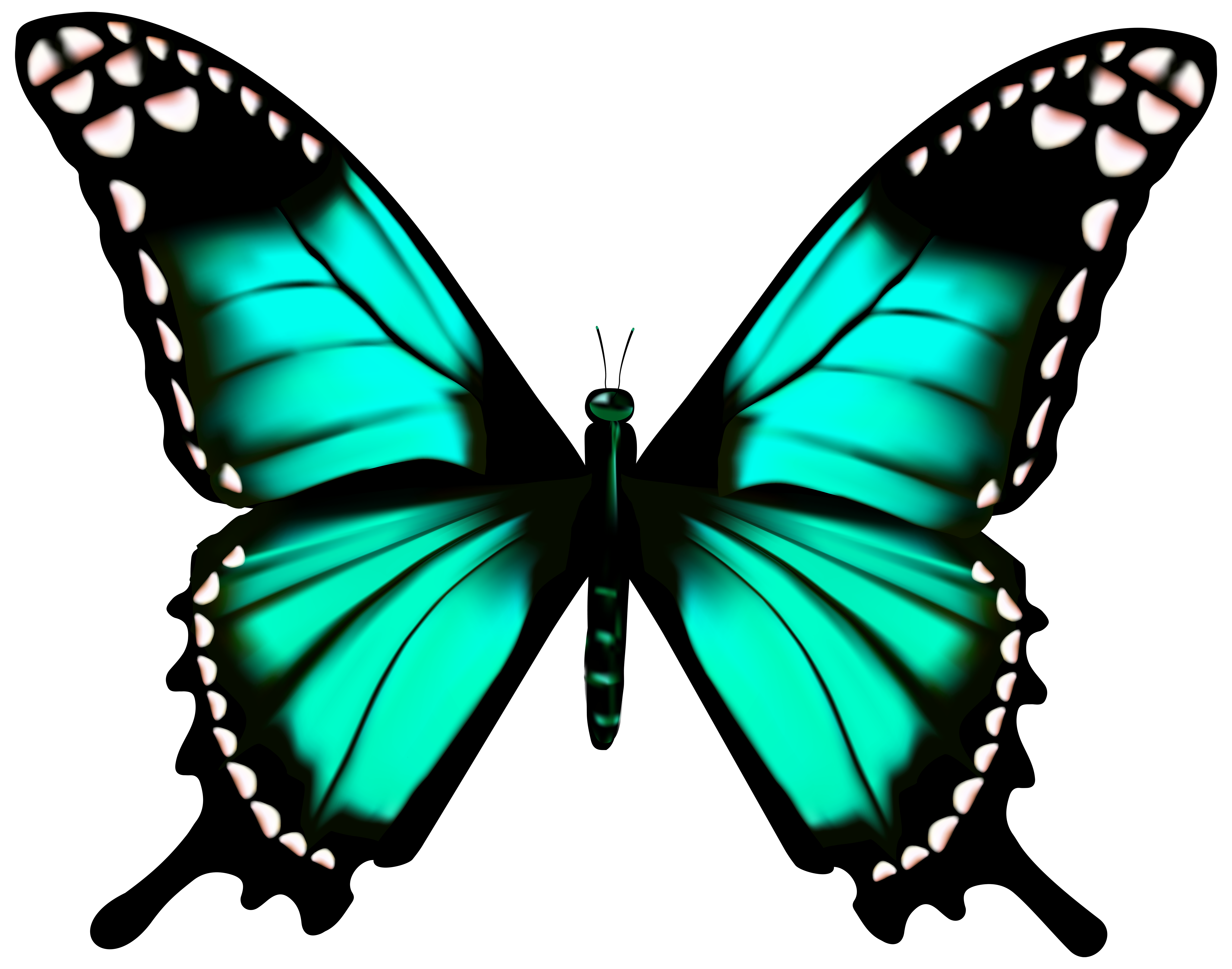 Butterfly png clip art. Moth clipart transparent