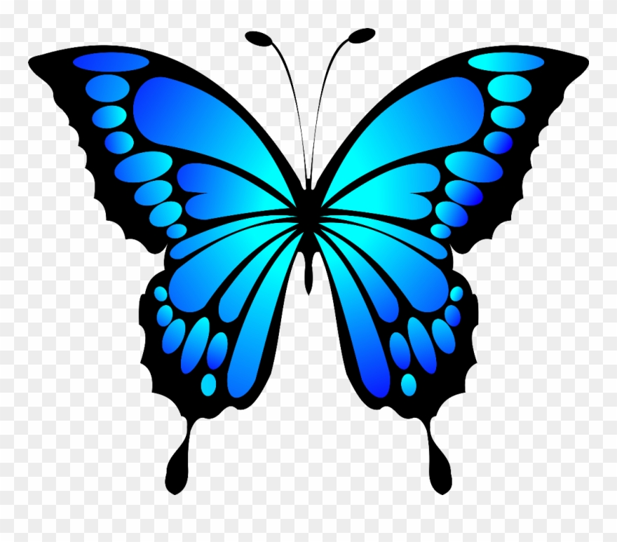 Blue morpho . Clipart butterfly insect