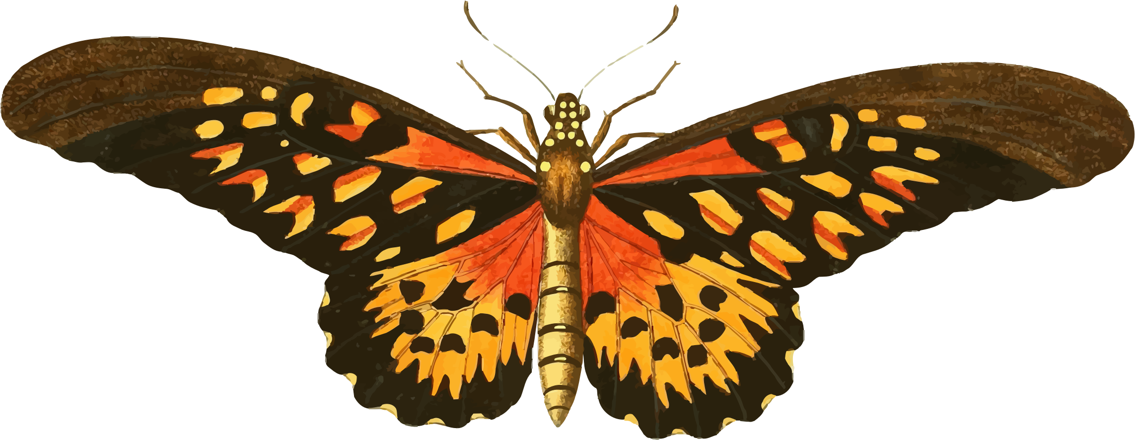 Clipart butterfly insect. Vintage illustration pinterest