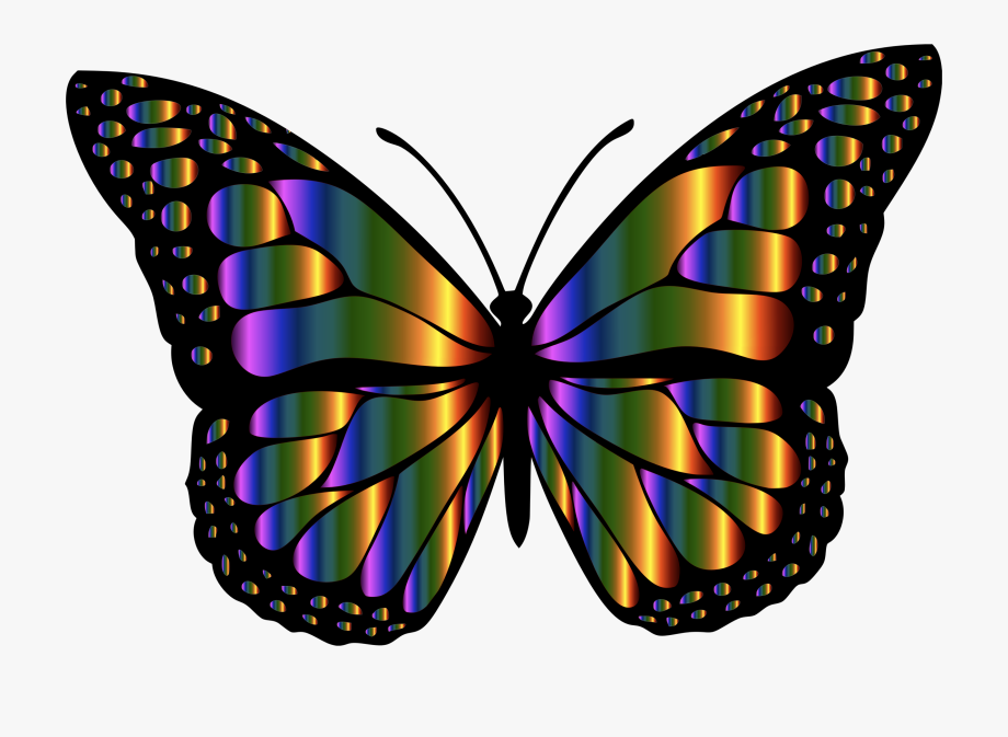 Clipart butterfly insect. Monarch large oil