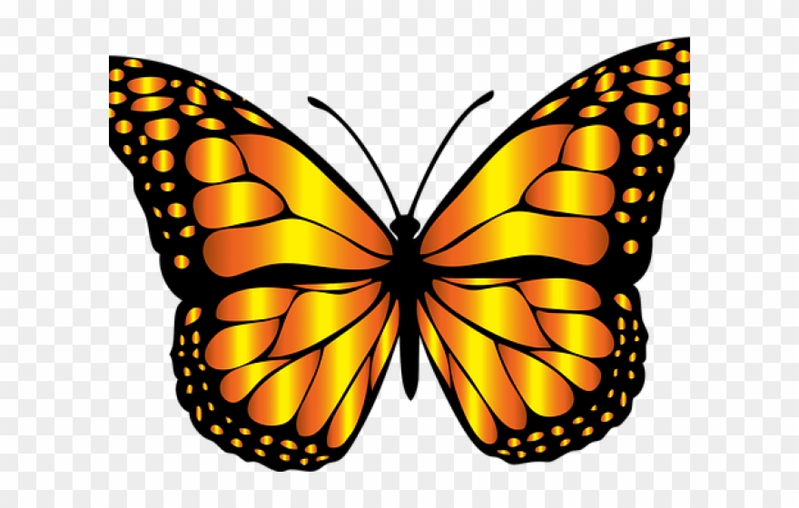 Monarch png full hd. Insect clipart butterfly