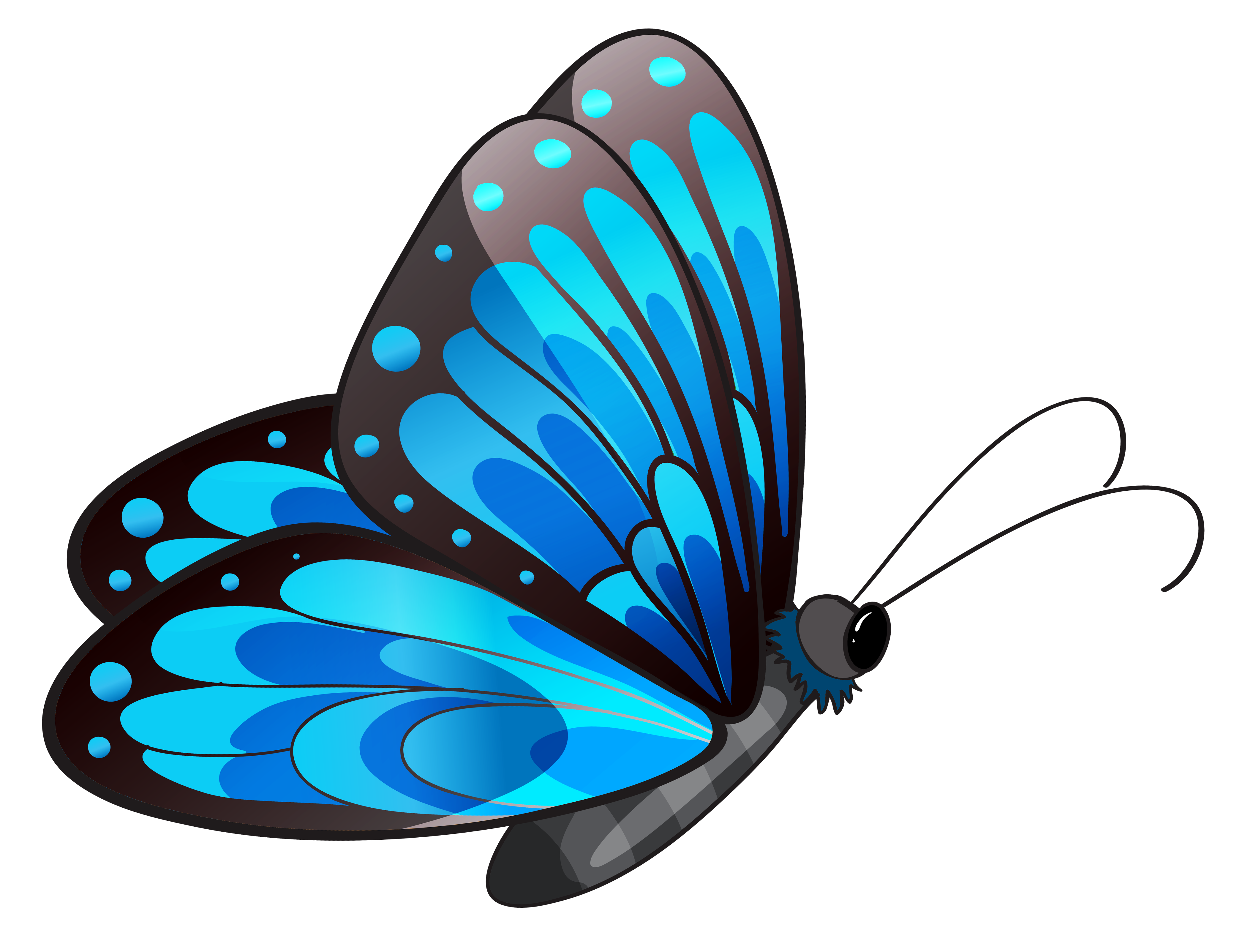 Transparent blue butterfly png. Fly clipart animated