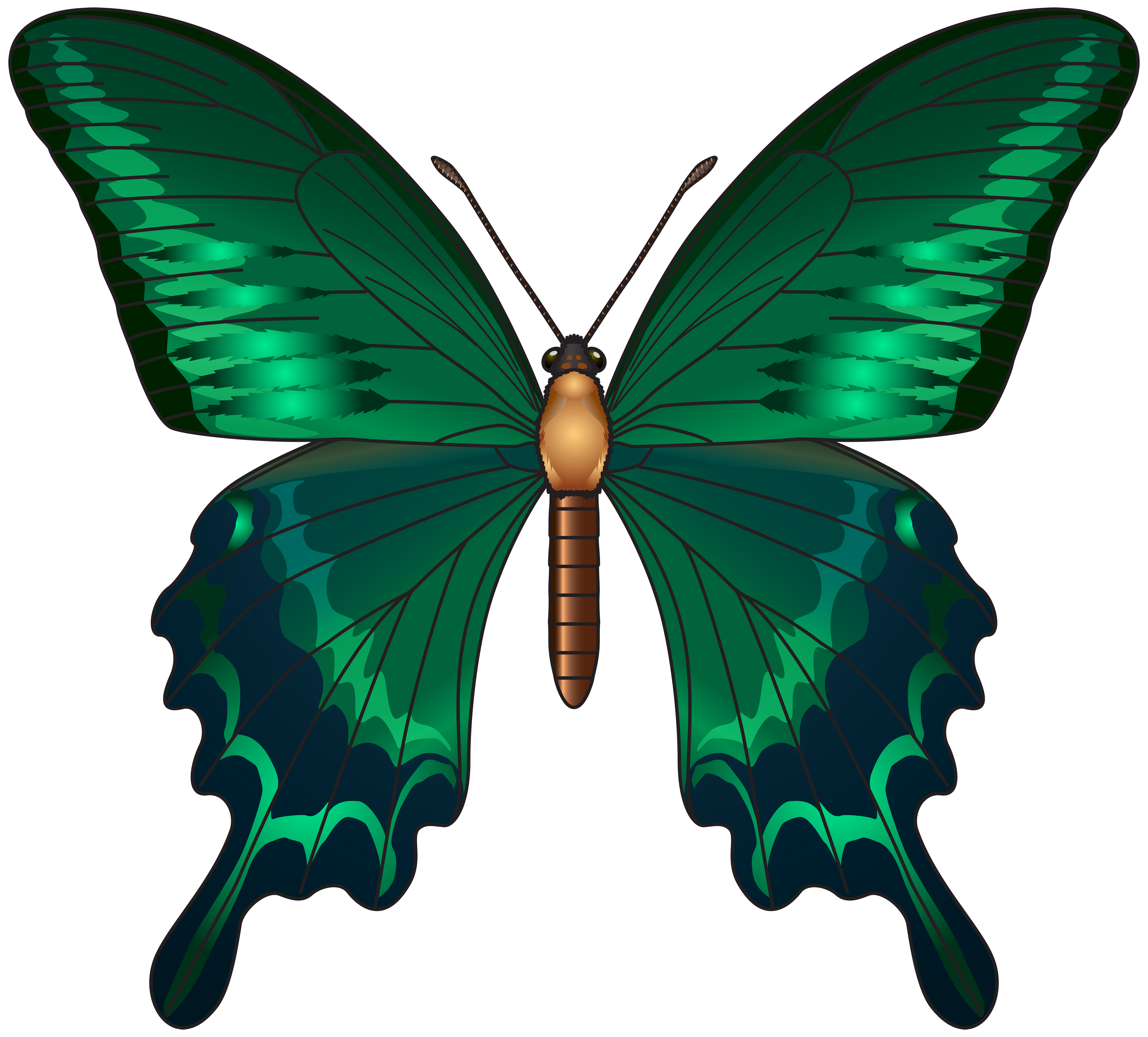 Moth clipart transparent.  collection of green