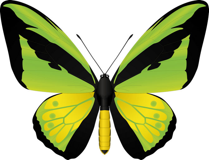 clipart butterfly mint