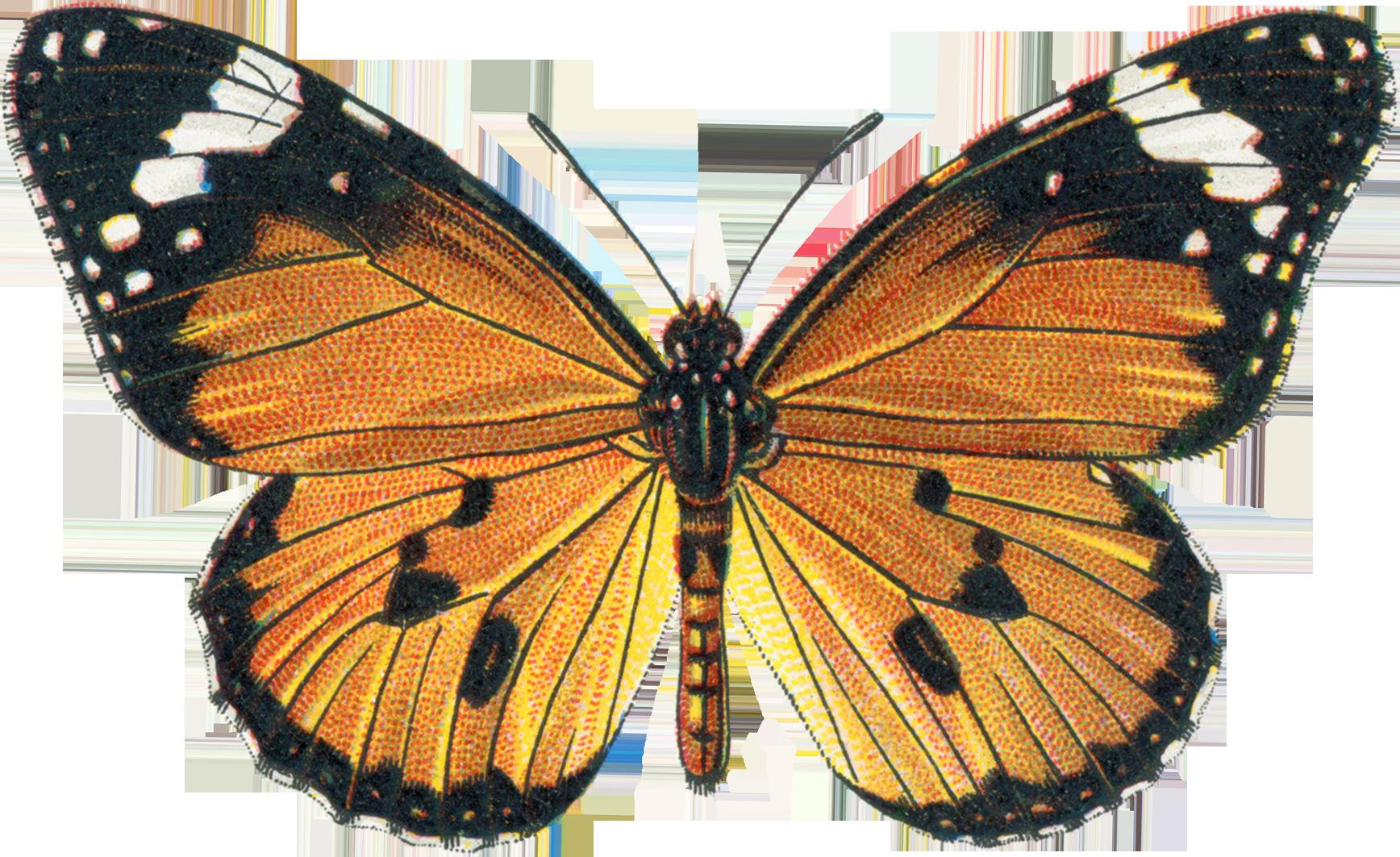 Public domain illustrations vintage. Clipart butterfly nature