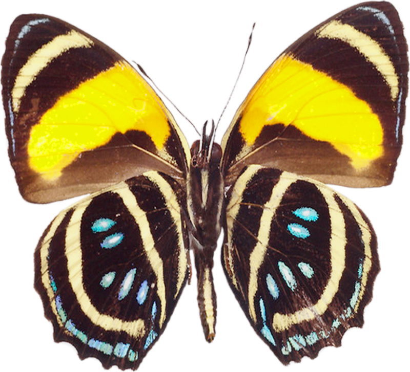 Clipart butterfly nature. Large brown png transparent