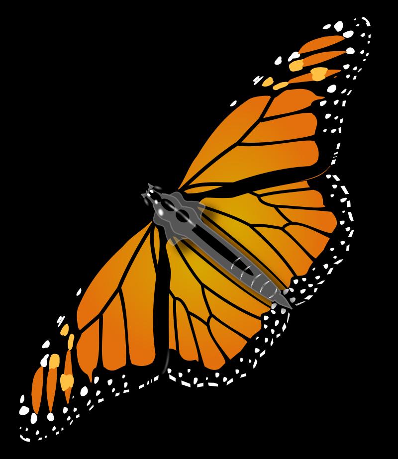Clipart butterfly net.  monarch clip art