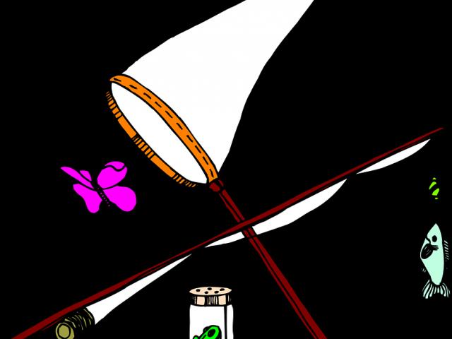 X carwad . Clipart butterfly net