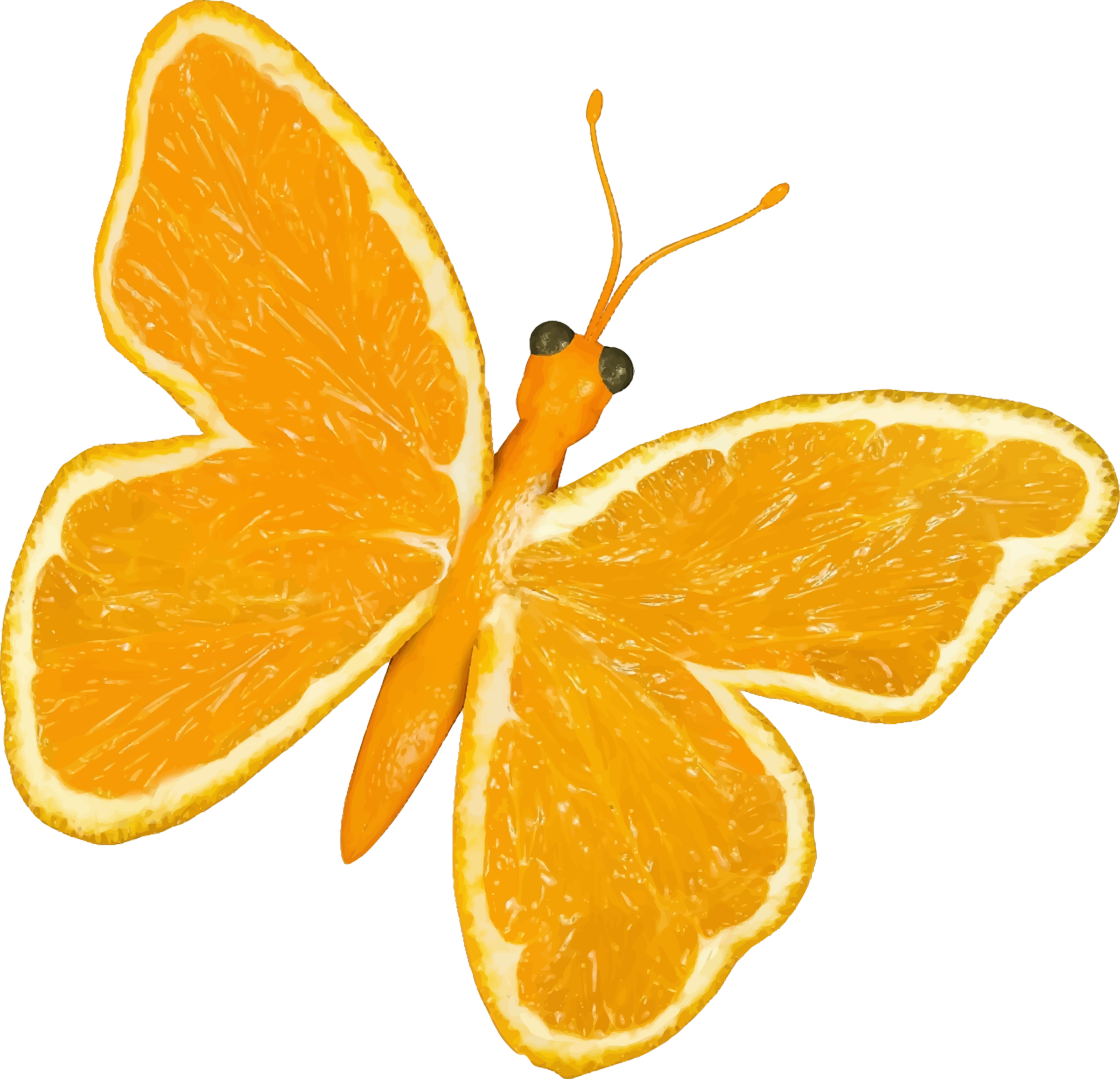 Clipart fruit orange. Citrus butterfly big image