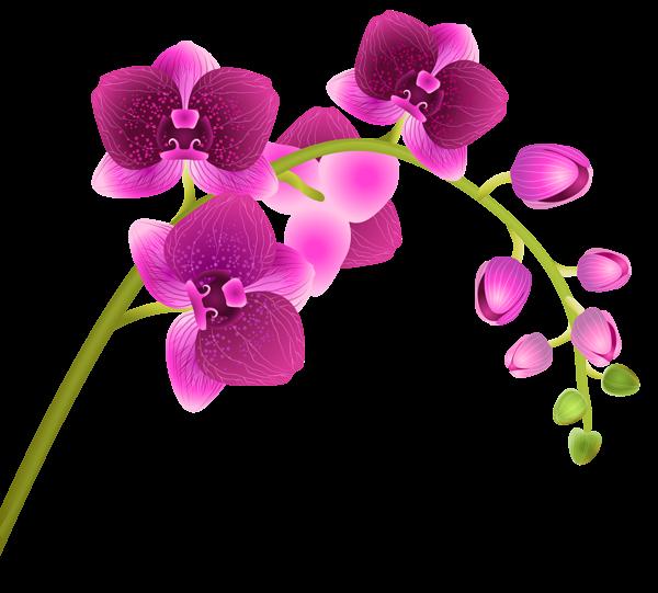 Orchid flower png clip. Lavender clipart transparent background