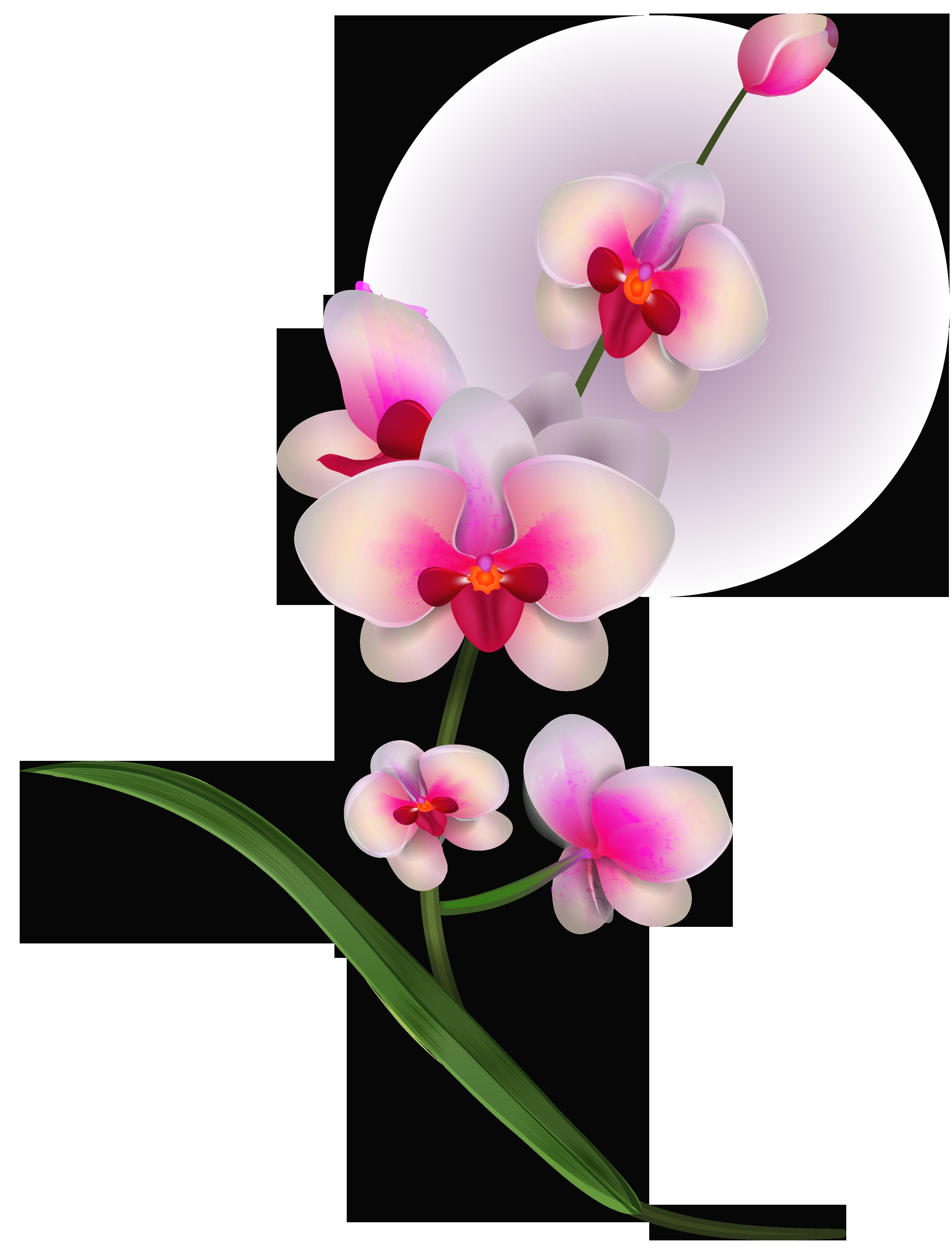 Orchid clipart orchid flower, Orchid orchid flower ...