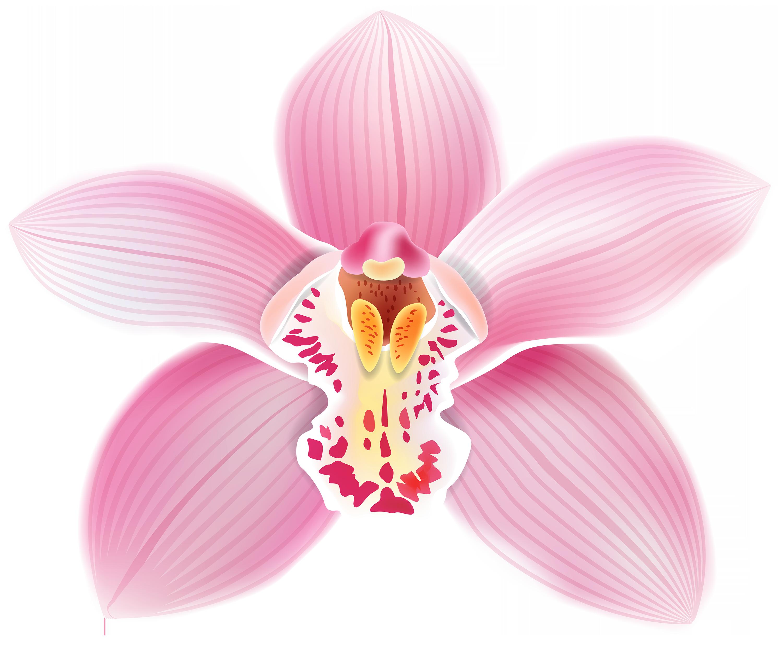 Gem clipart watercolor. Orchid png google cuba