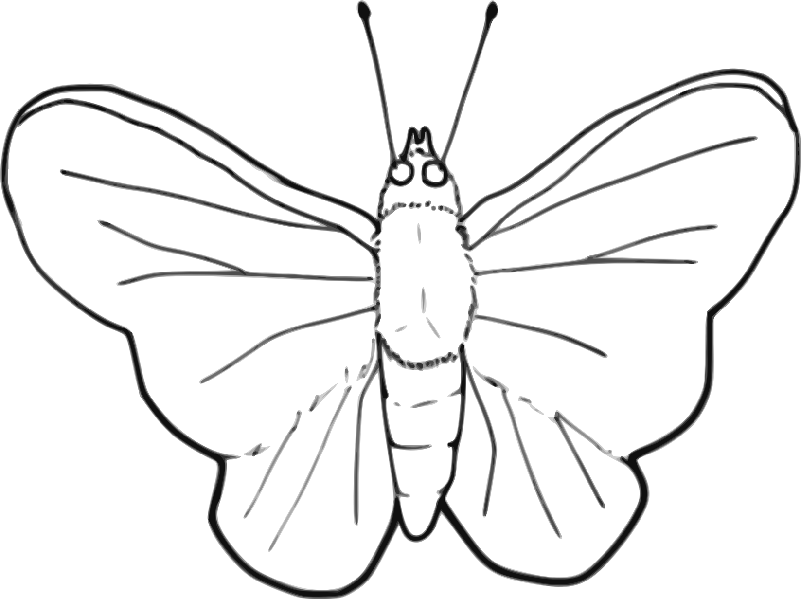 Insects clipart line art. Butterfly big image png