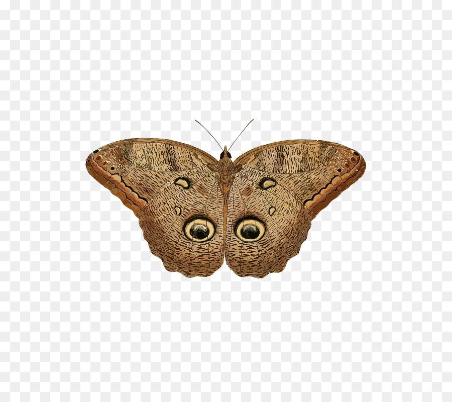 Transparent clip art . Clipart owl butterfly