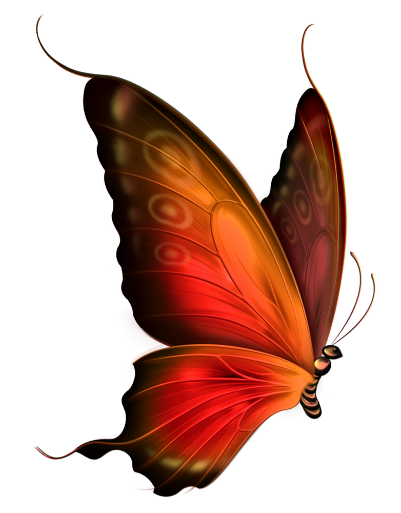 Moth clipart brown butterfly. How horrible tragedy revealed