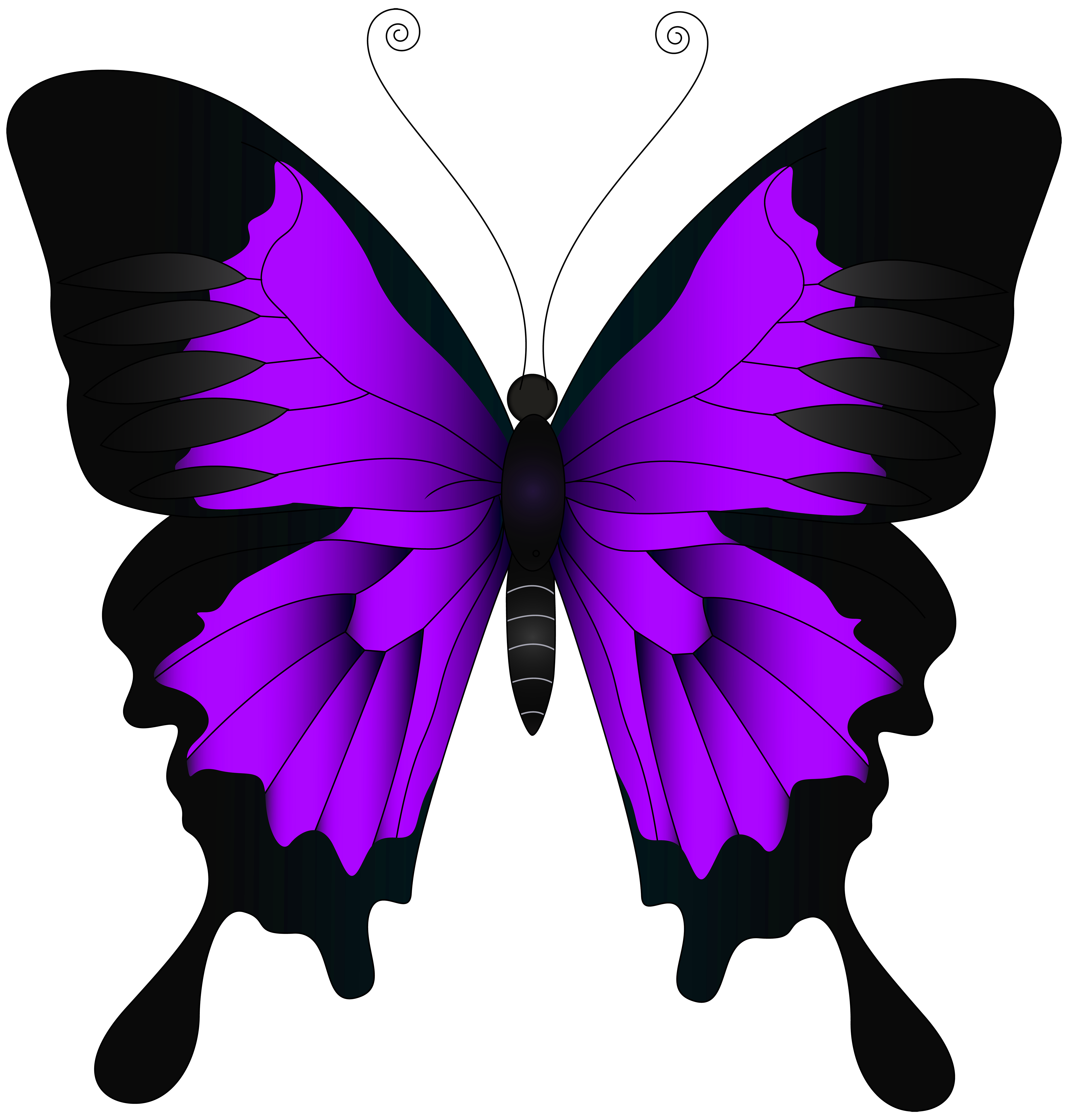 Butterfly high definition video. Purple clipart insect