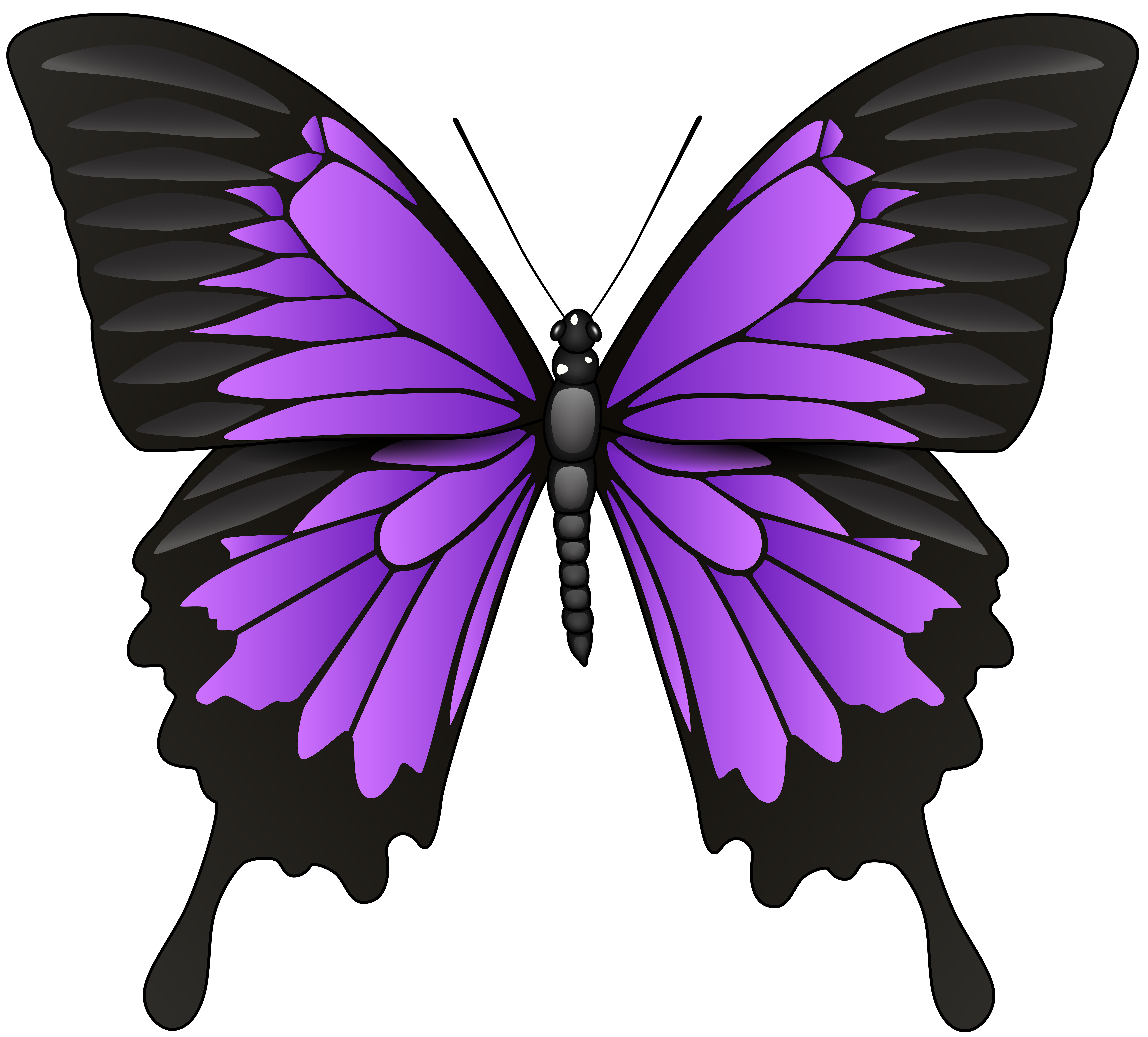 collection of butterfly. Keys clipart purple