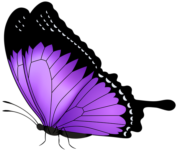 Dress clipart malay. Purple butterfly transparent png