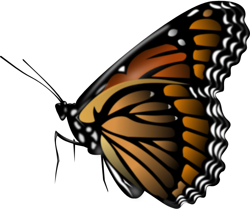 Monarch butterfly animation clip. Moth clipart botanical illustration