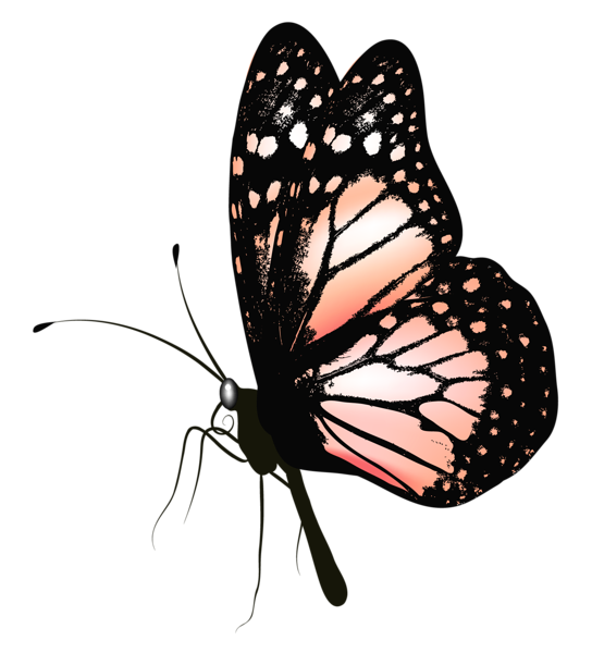 Clipart butterfly realistic. Http favata rssing com