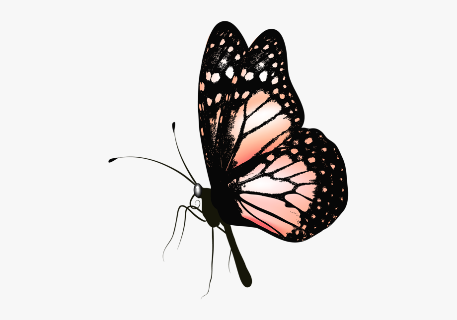 Clipart butterfly realistic. Monarch http clip art