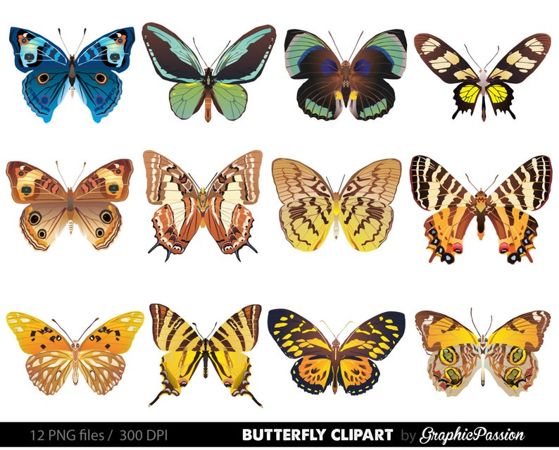 Clipart butterfly realistic. Digital collage sheet scrapbook