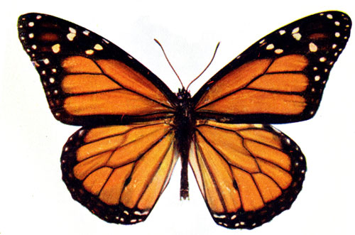Free real cliparts download. Clipart butterfly realistic