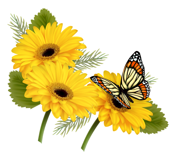 Clipart rose butterfly. Yellow gerberas with png