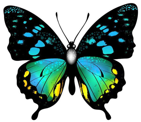 Moth clipart garden. Blue colorful butterfly png
