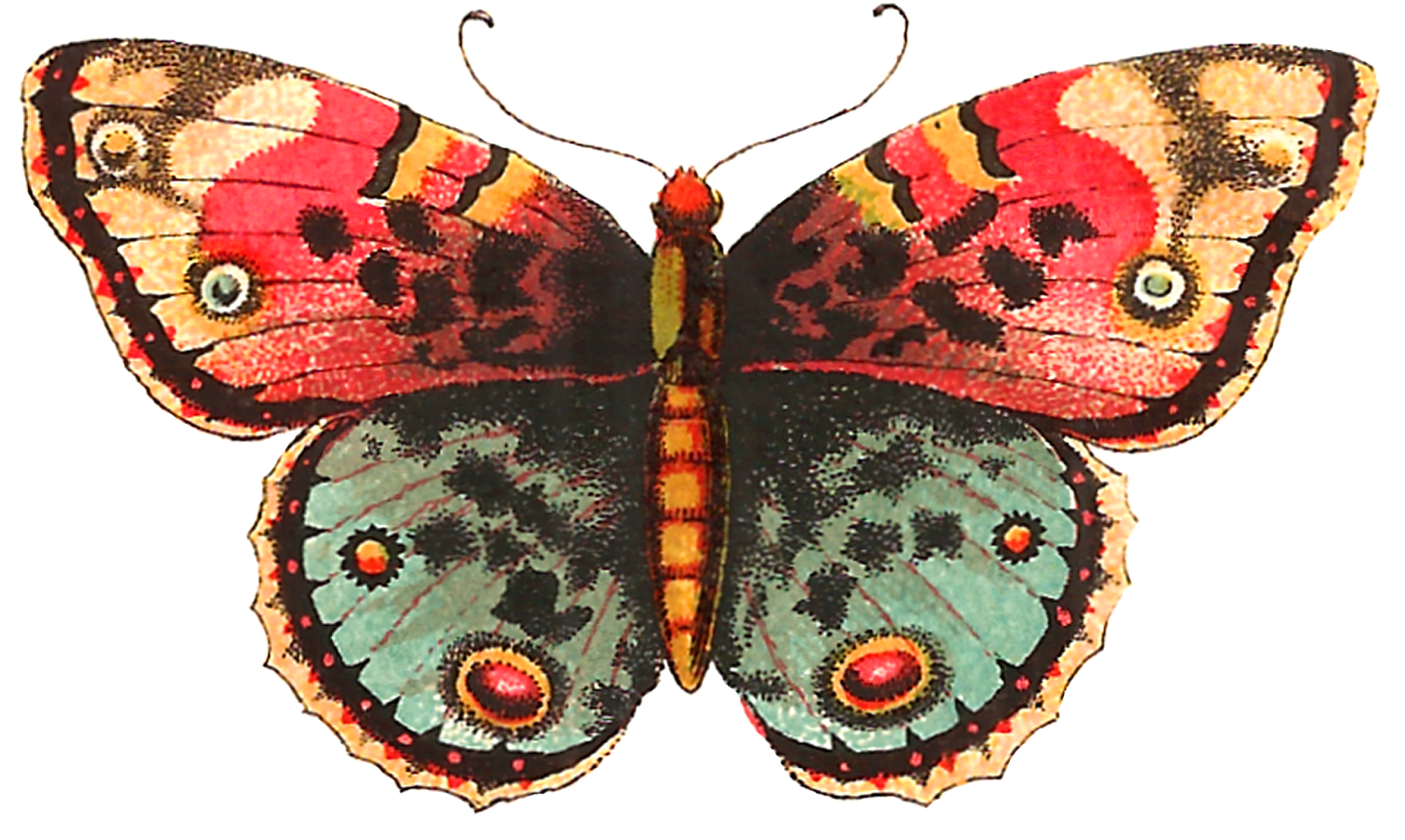 Moth clipart vintage butterfly. Antique images free digital