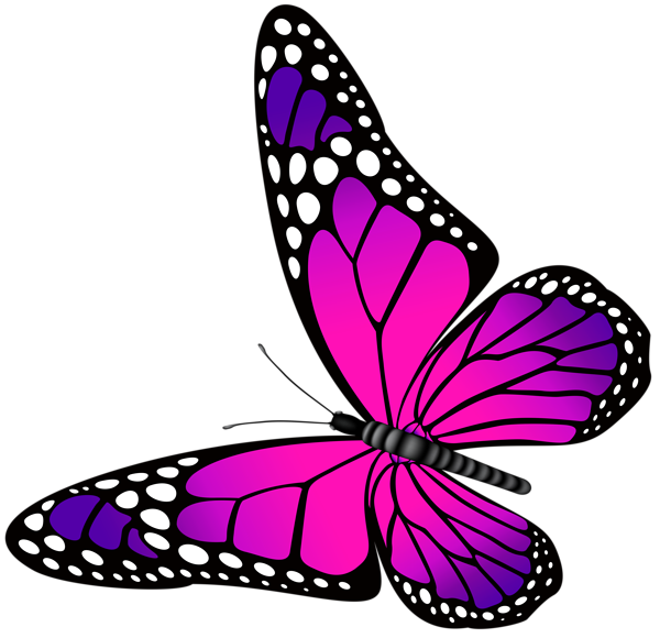 Butterfly pink and transparent. Square clipart neon purple