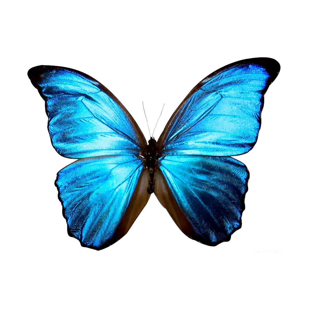 Blue printable google search. Kite clipart butterfly