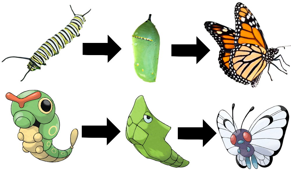 clipart butterfly transformation