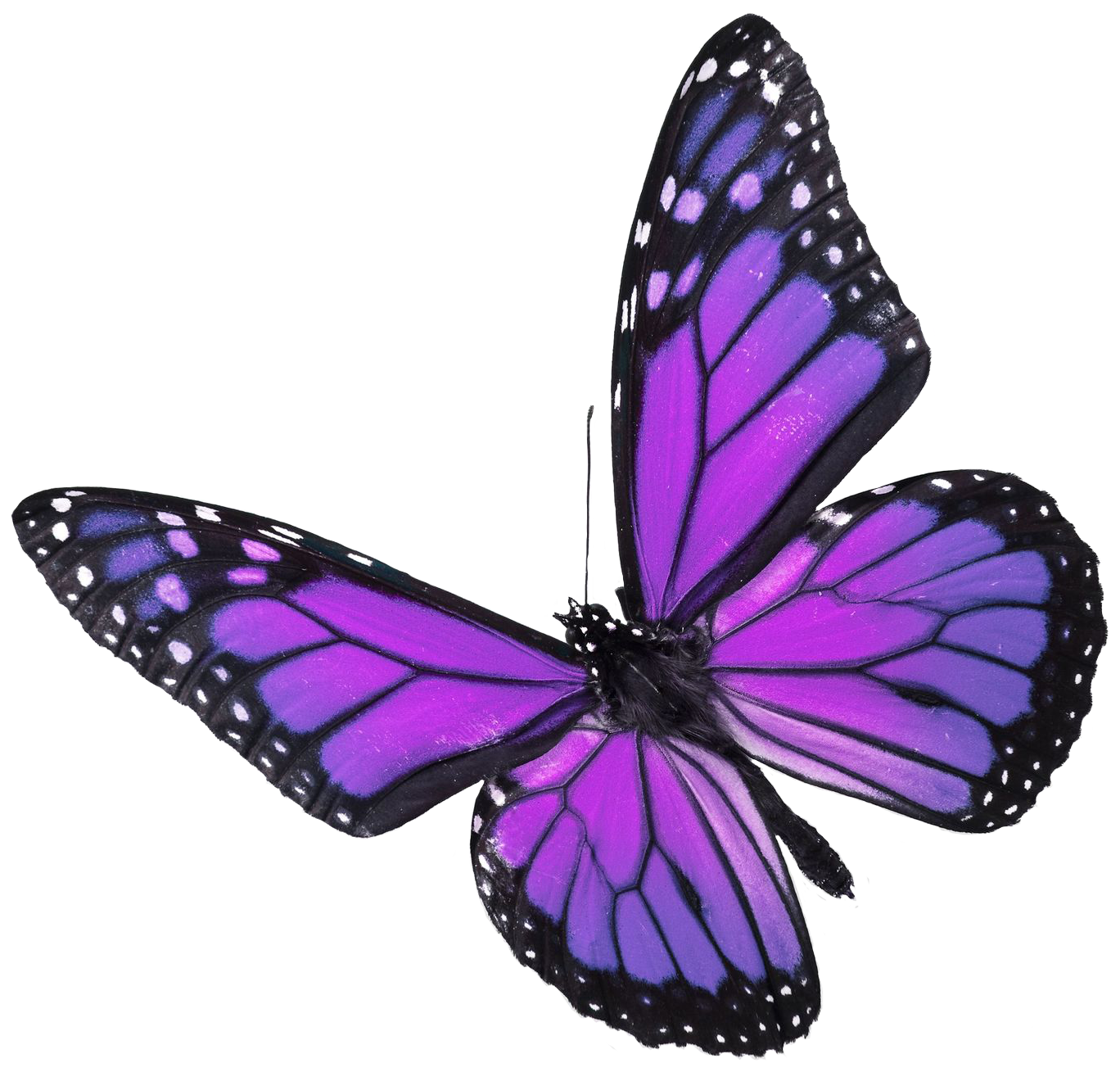 Clipart butterfly translucent. Showing gallery for real