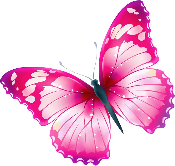Clipart butterfly translucent. Free transparent download clip