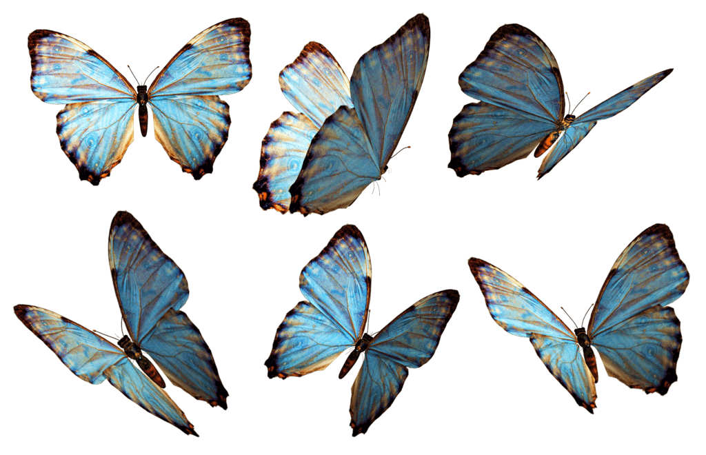 Butterflies png images stickpng. Clipart butterfly transparent background
