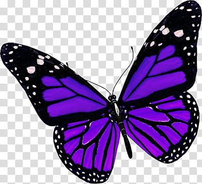 Recursos purple and black. Clipart butterfly violet